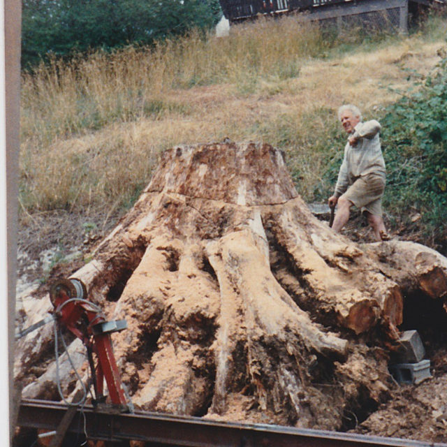 The tree stump removal